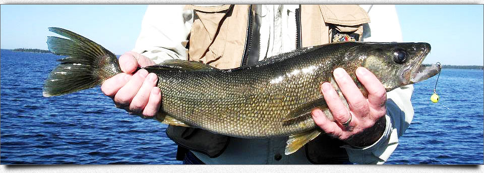walleye-image